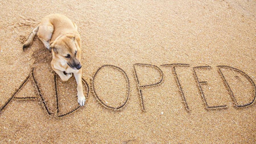eba5008da Cachorros para adoção  24 razões para adotar cachorro