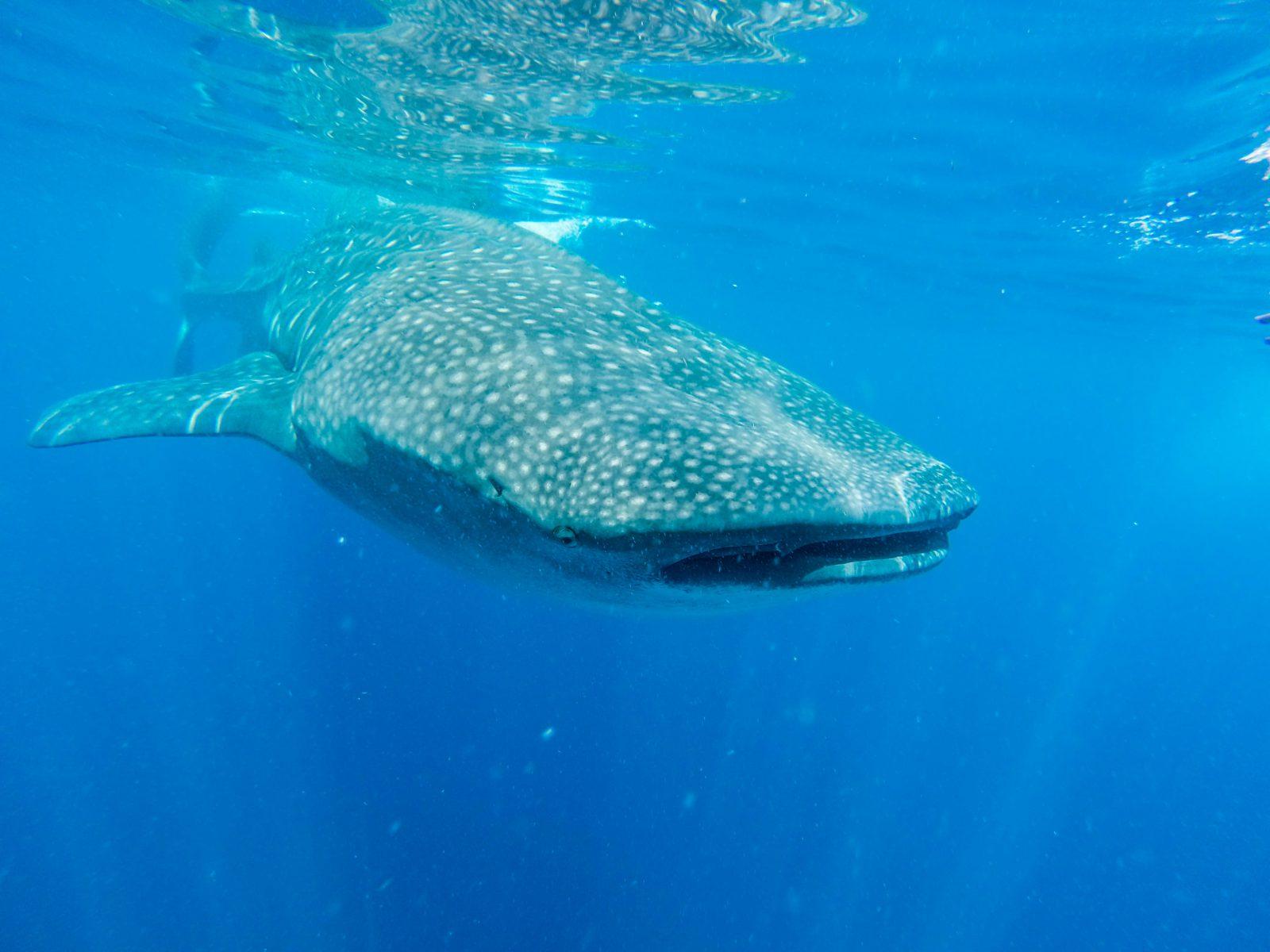 baleia azul em todos os locais do planeta