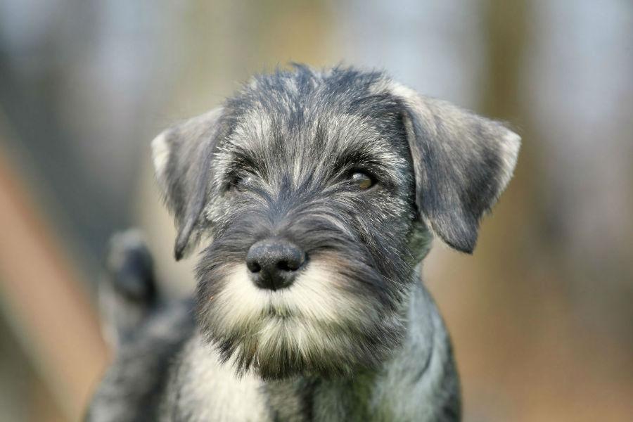 cachoror-atributos-naturais