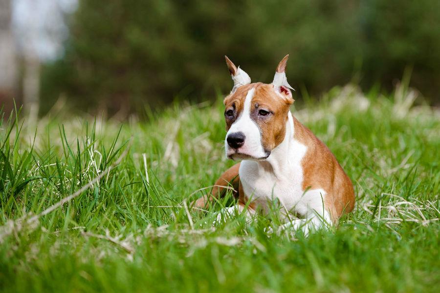 cachorro-atributos-naturais