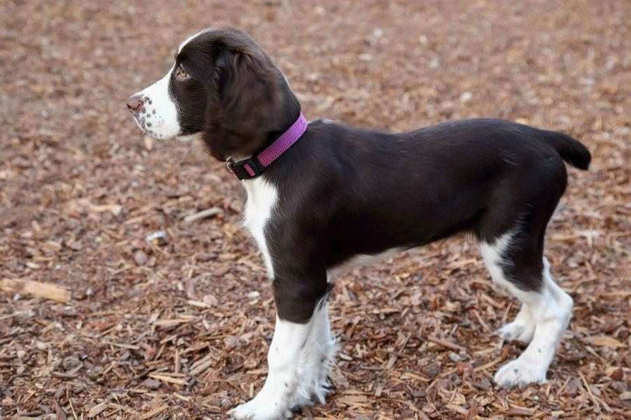 cachoror-atributos-naturais9