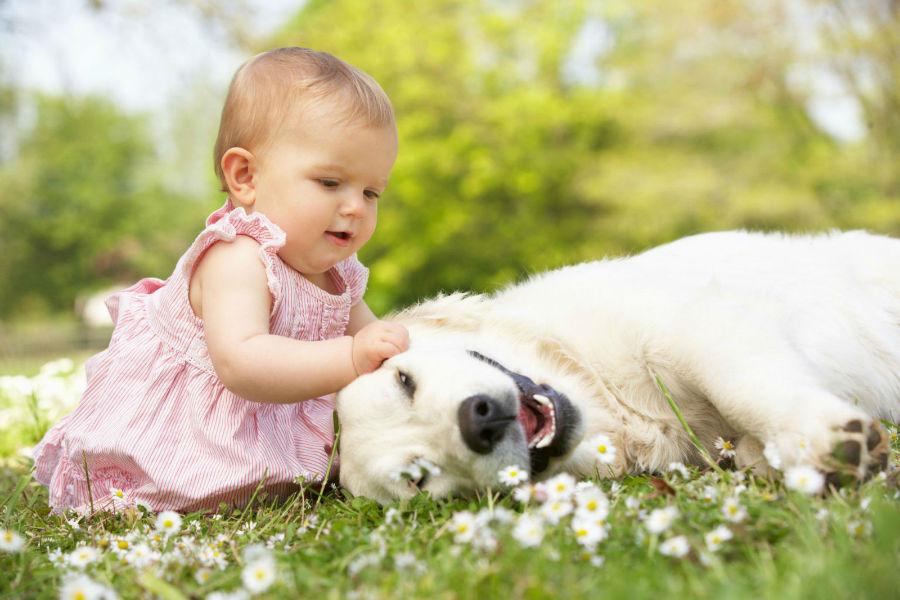 cachorro-bebe-brincando