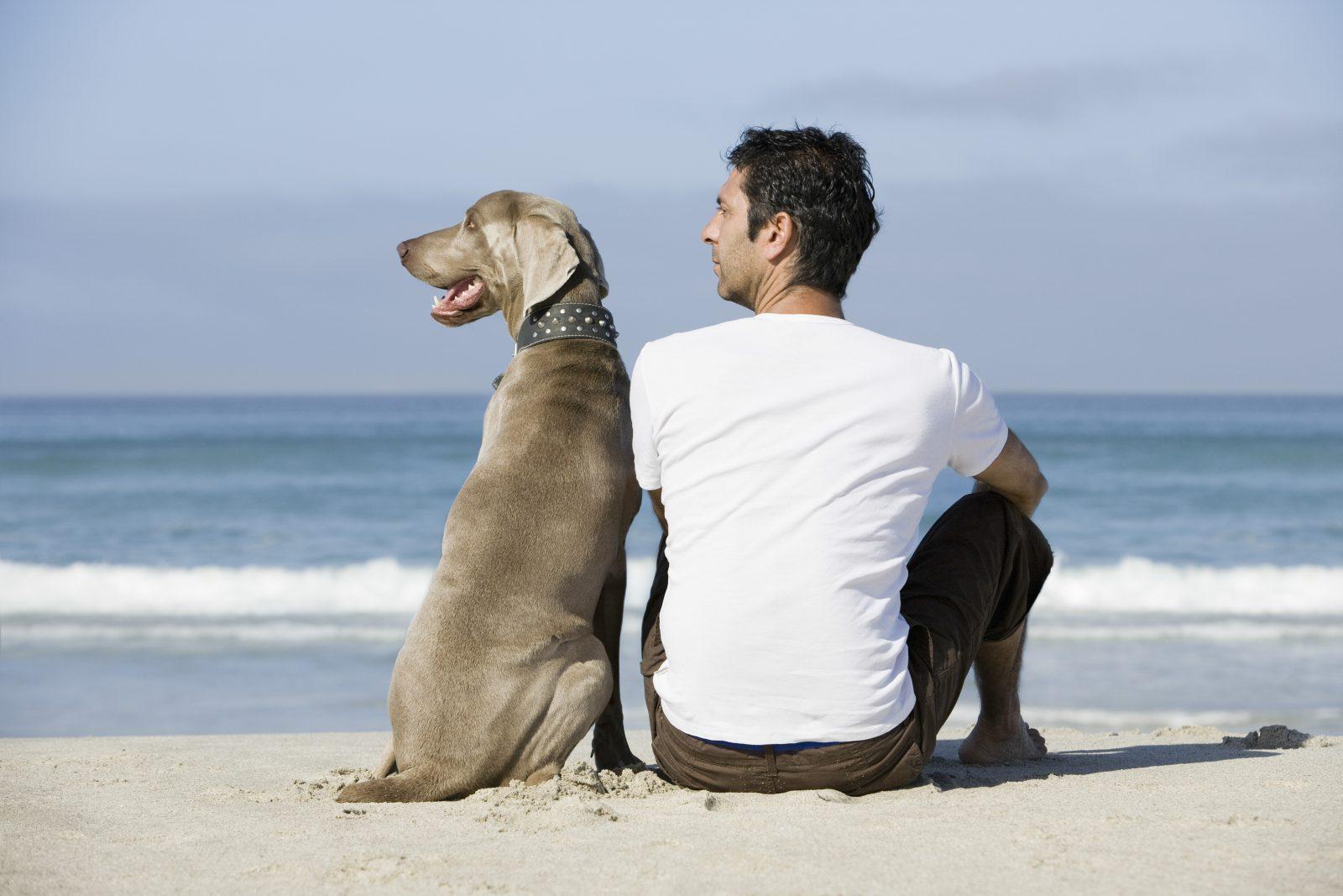 4 sinais que provam o quanto o seu cachorro confia em você