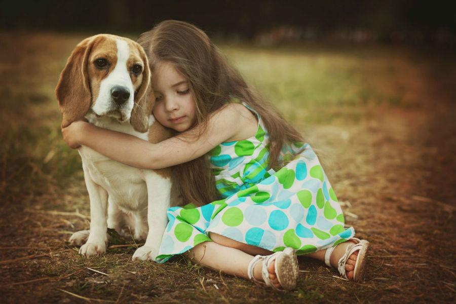 cachorro-crianca-beagle