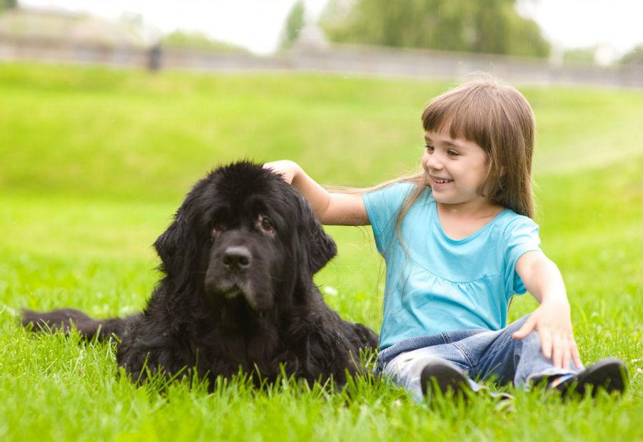cachorro-crianca-terranova