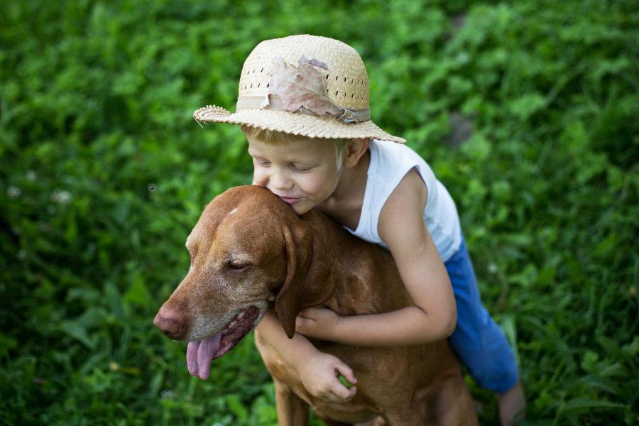 cachorro-crianca-vizla