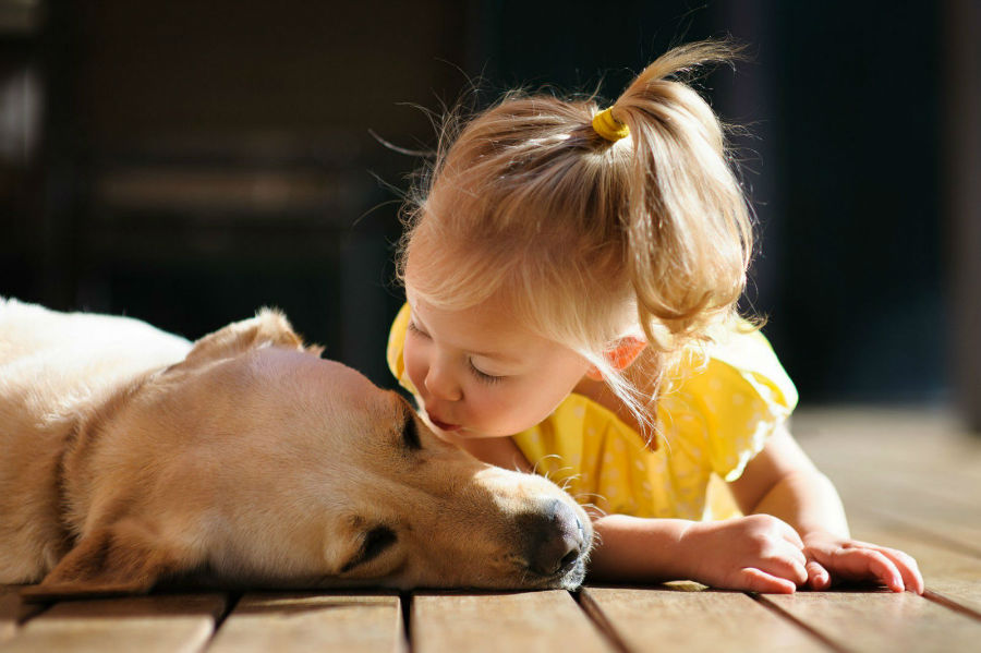 menina-beijando-cachorro-labrador