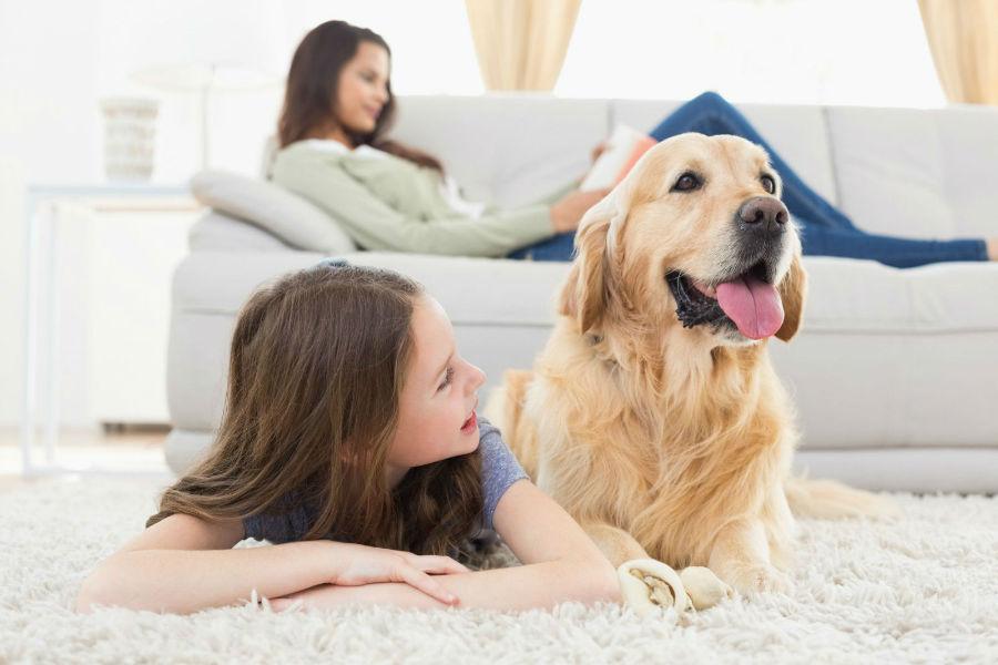 melhores-cachorro-crianca