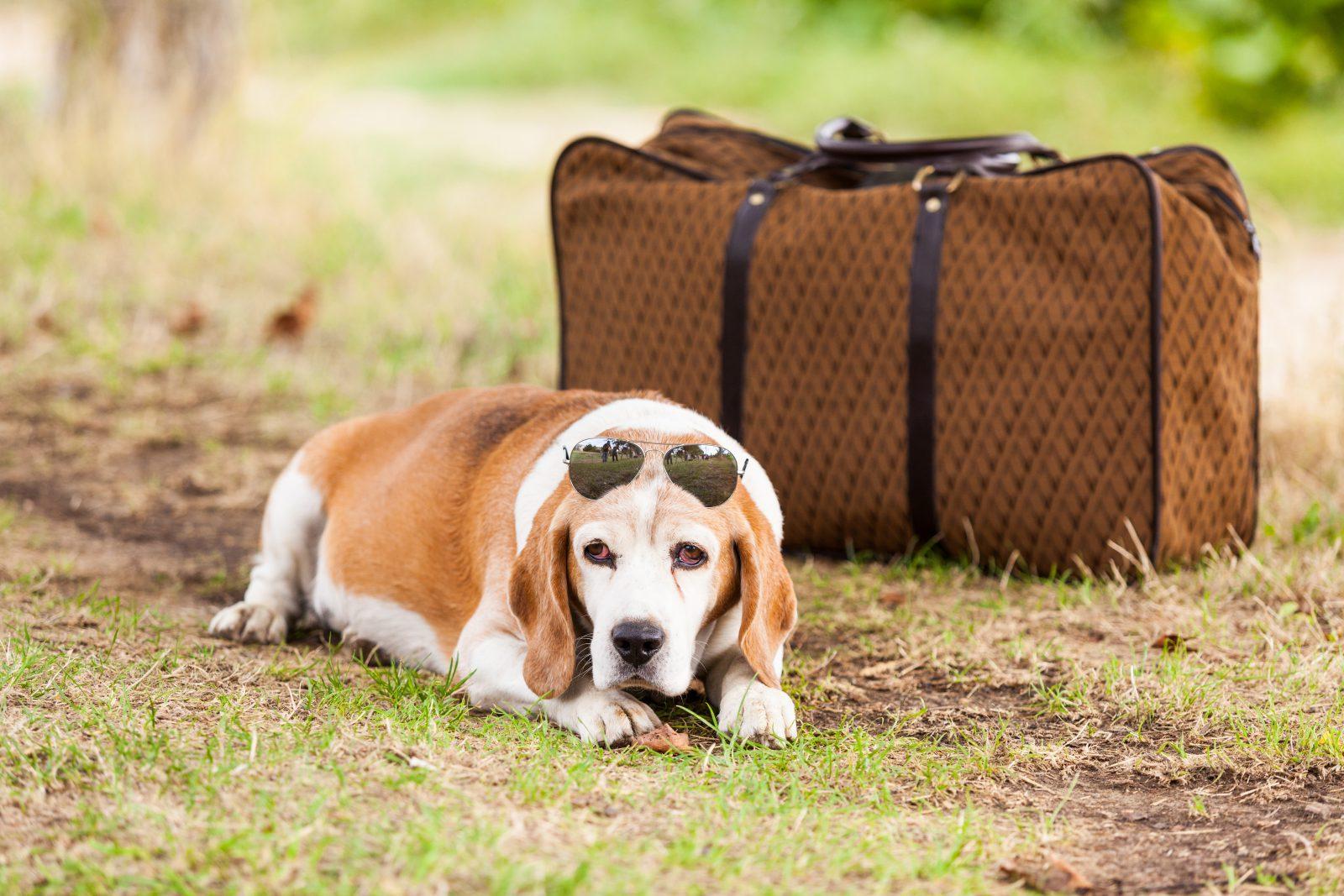 Saiba como encontrar a melhor hospedagem para o seu cachorro