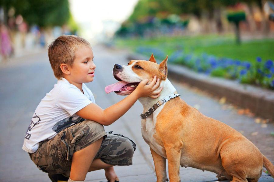 cachorro-raca-bully-socializacao
