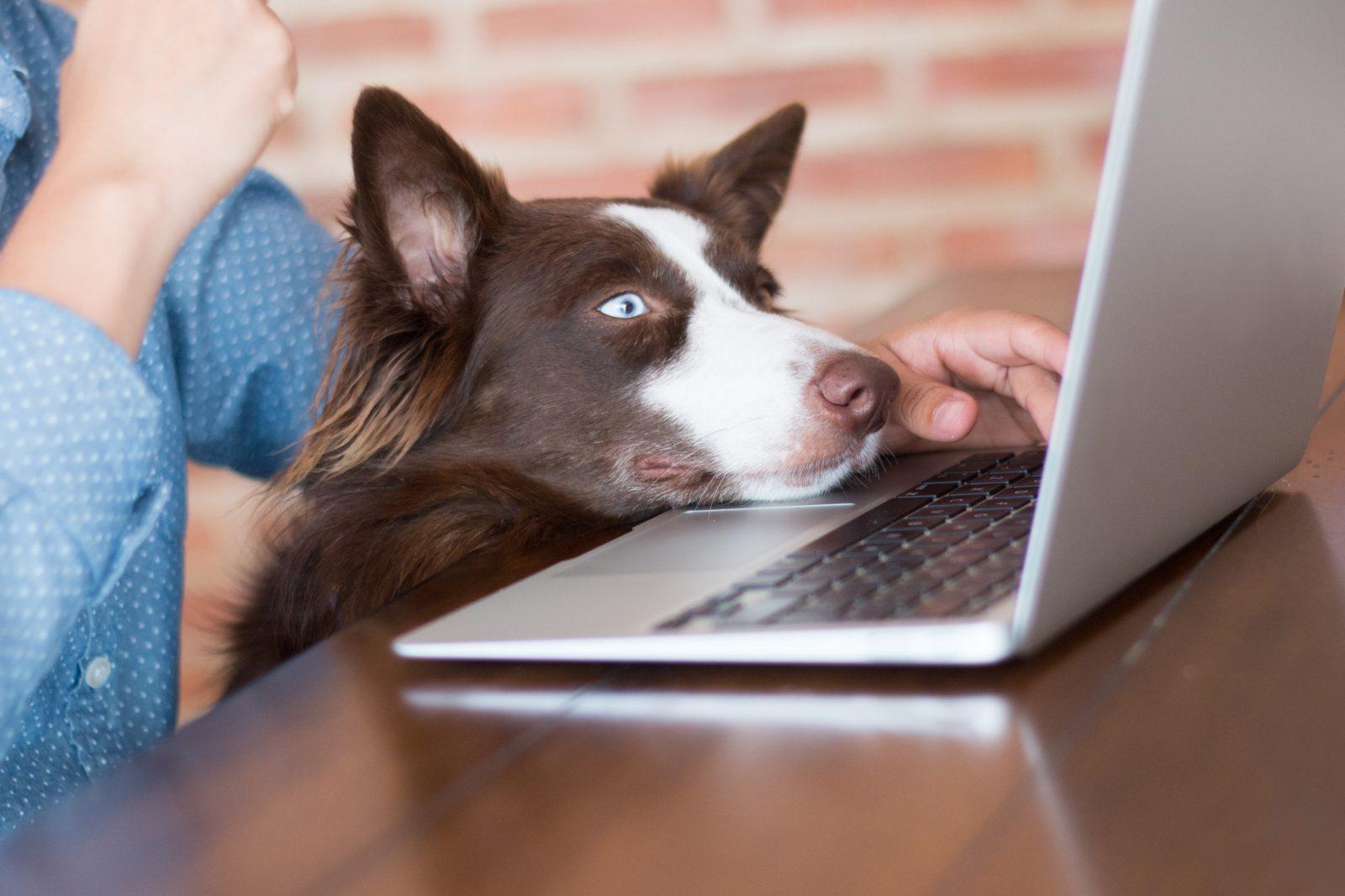 Cachorro no trabalho melhora o astral do ambiente