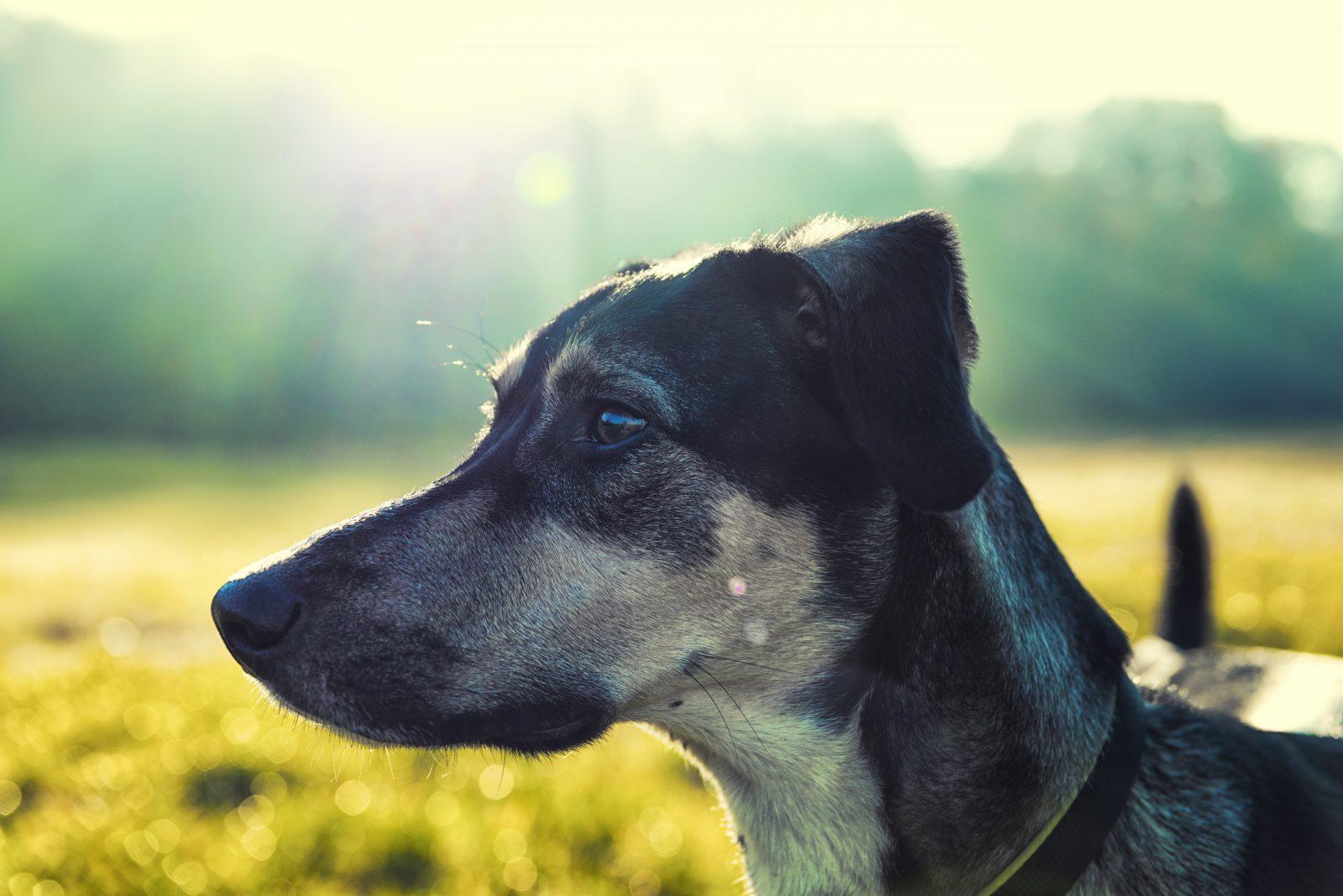 Fotos de cachorro vira lata: uma companhia para a vida inteira e qualquer atividade.