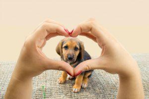 cachorros-fazem-bem-as-pessoas