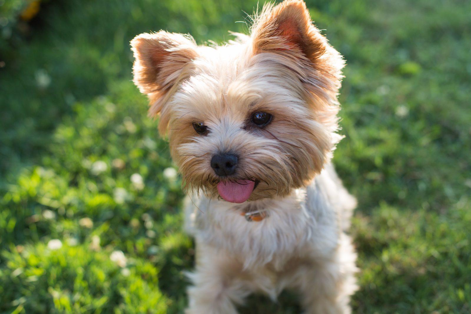Da mesma forma que existem os cachorros mais fedidos, também temos os que não exalam odores.