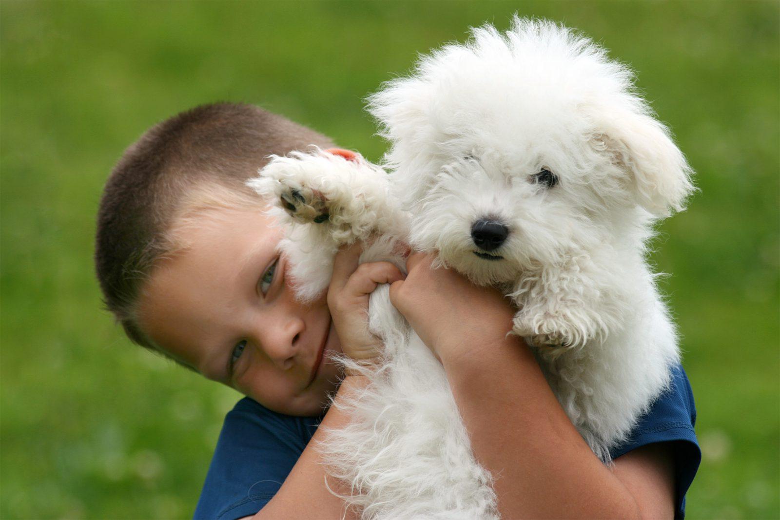 Cachorros pequenos: Garotinho abraçado com o seu filhite de Bichon frisé