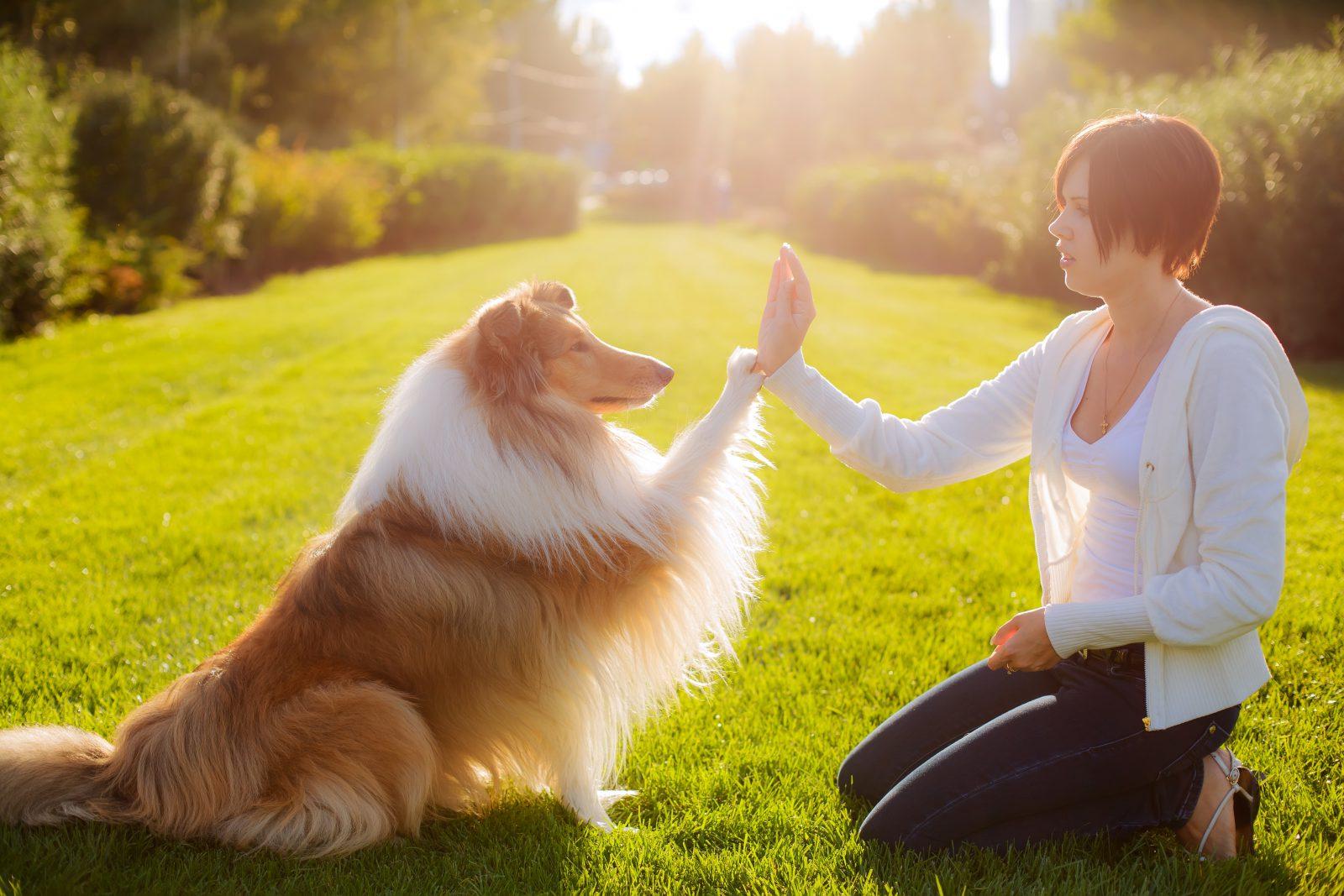 Você sabia que os cachorros sabem o quanto são amados?