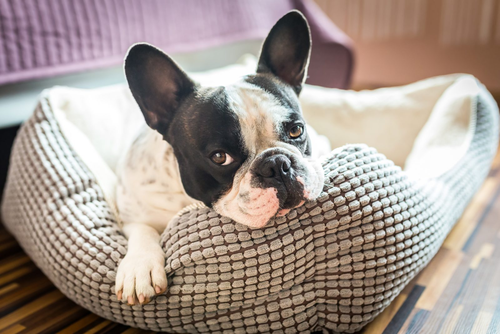 Porque comprar uma caminha de cachorro – Onde o seu cão dorme?