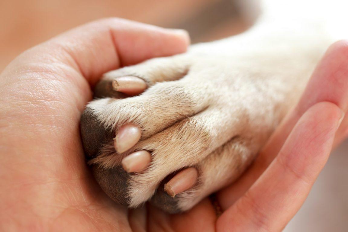 como cortar unha de cachorro: pessoa segurando pata do cachorro