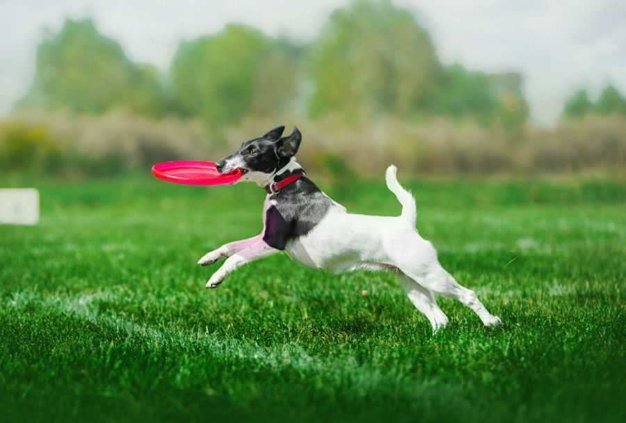 competicoes-populares-frisbee