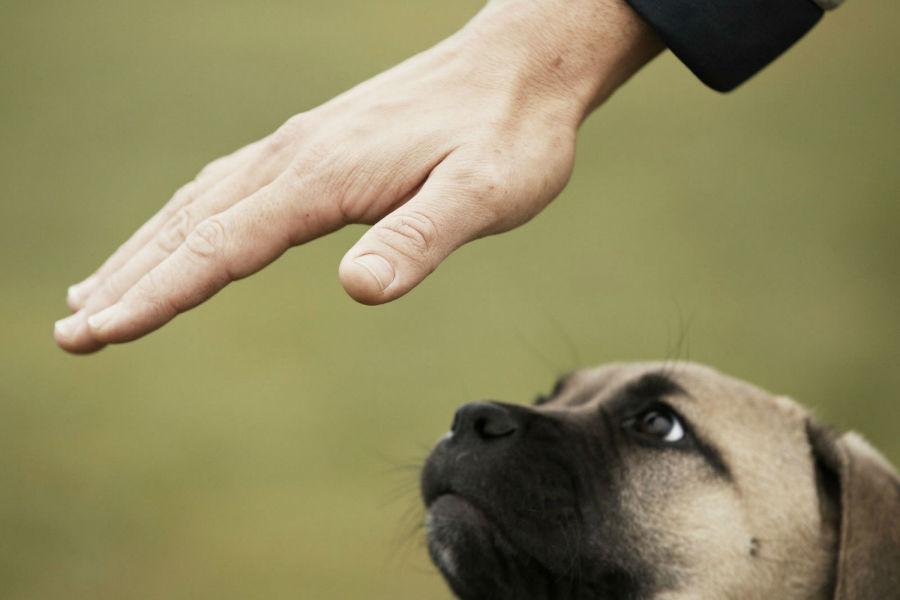 diversao-cachorro-exercicios-obediencia