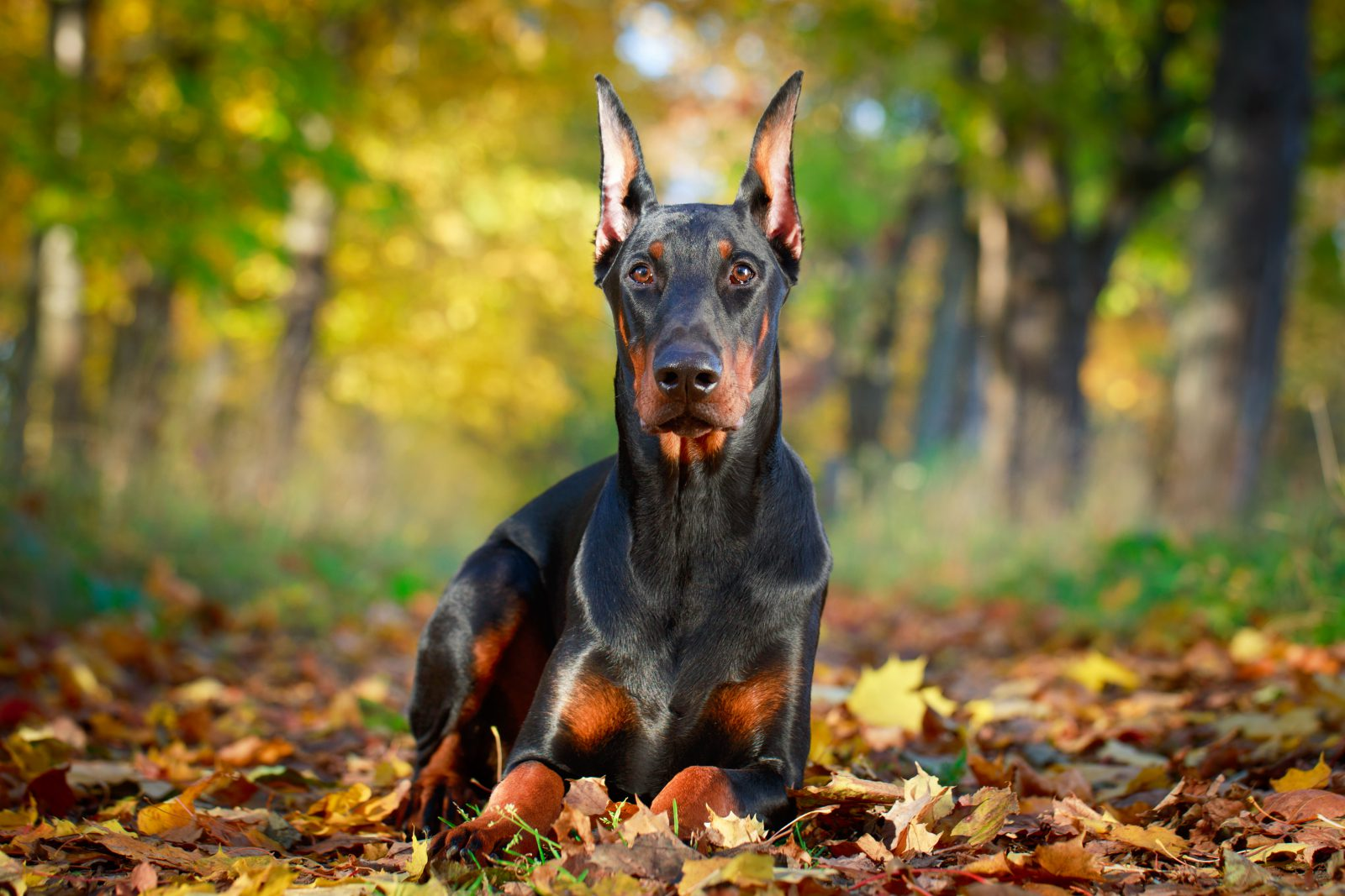 Todo cachorro nasce com atributos naturais que deveriam ser mantidos