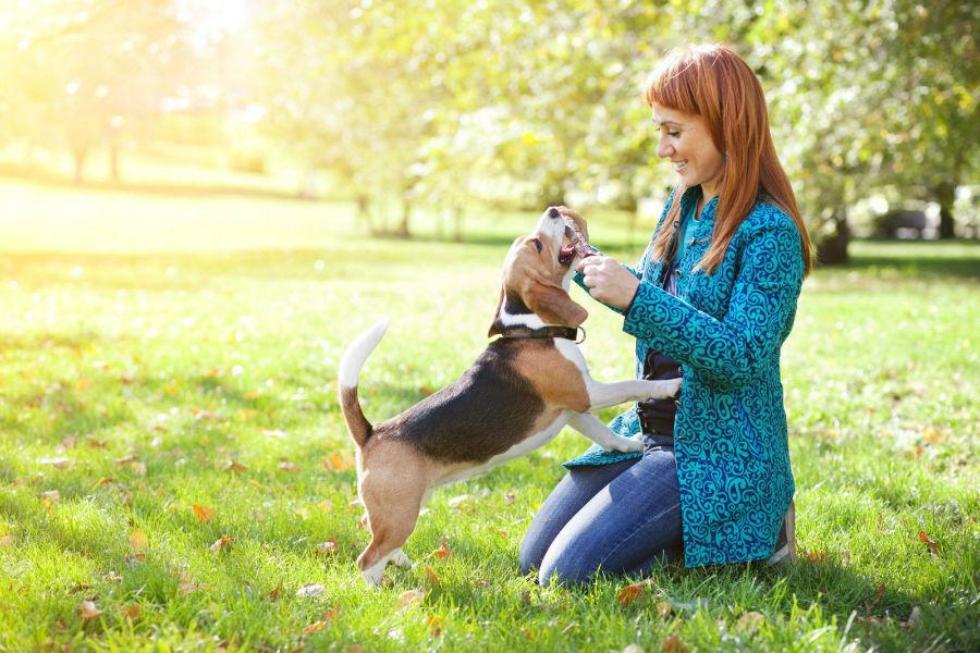 Resultado de imagem para imagem treinando cachorro