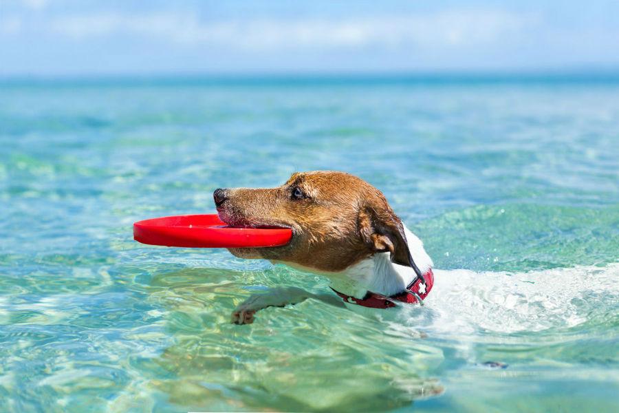 estender-longevidade-cachorro-exercicios