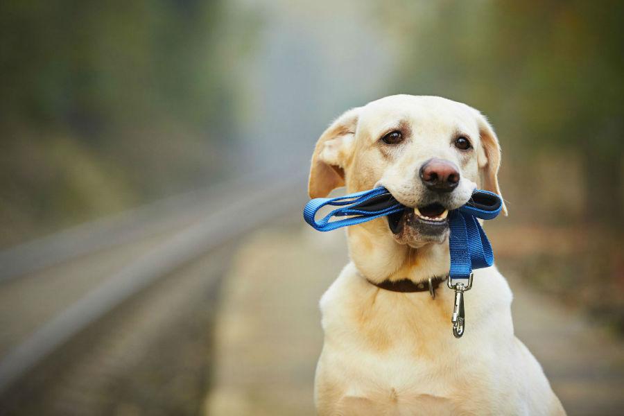 estender-longevidade-cachorro-exercicios2