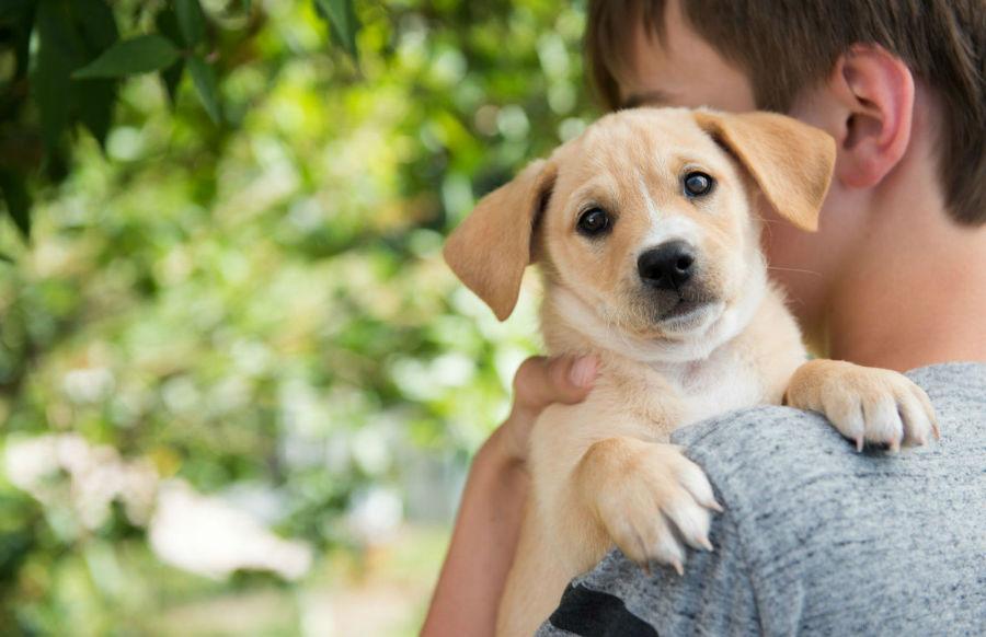 filhote-cachorro-confiar