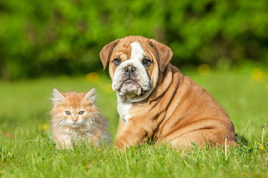 filhote-cachorro-socializar