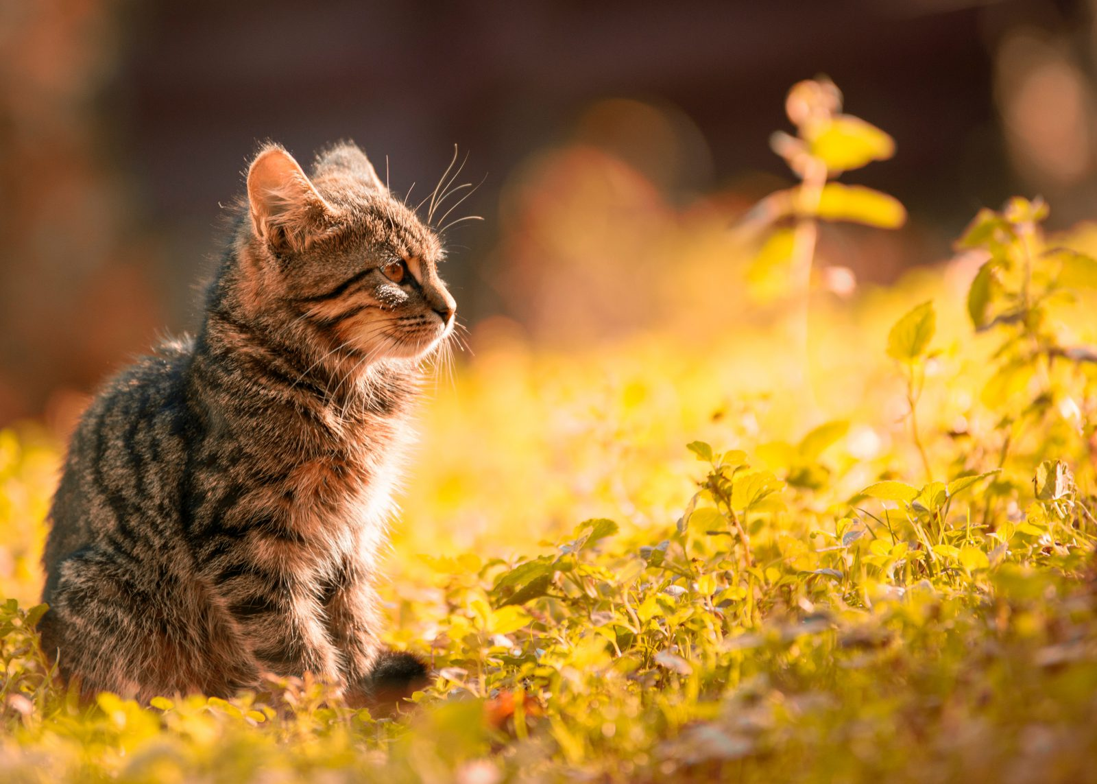 O filhote de gato exige cuidados e manutenção, embora mínima comparada ao cachorro.