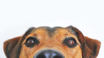 focinho de cachorro