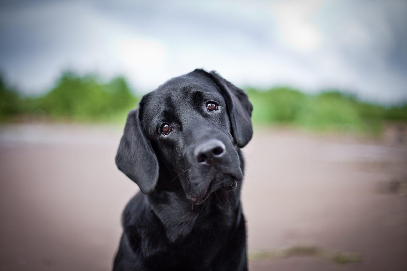 11 formas de encurtar a vida do seu cachorro