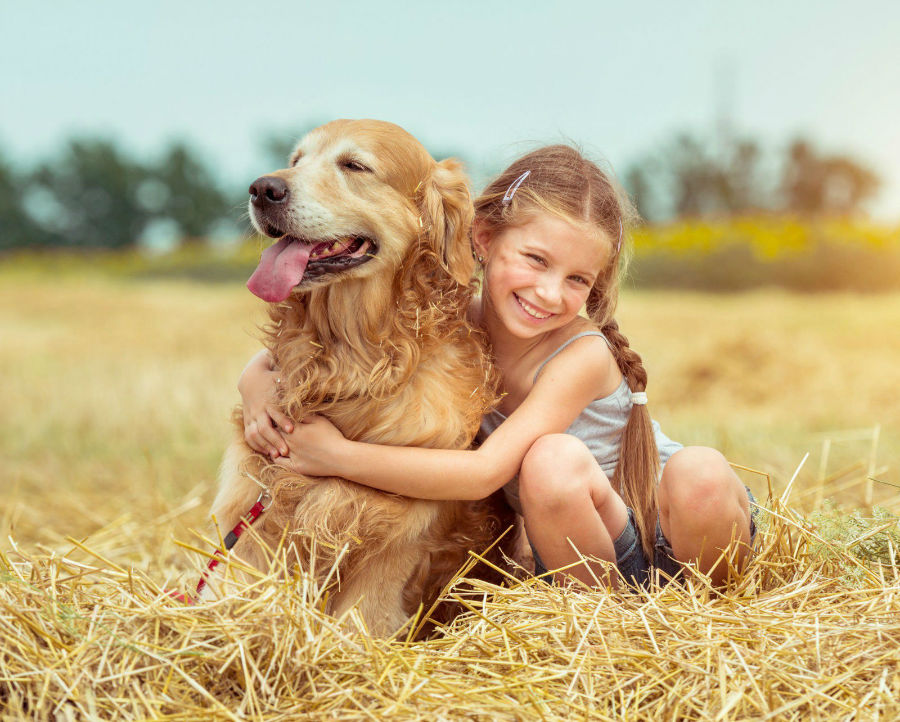 cachorro-golden-retriever-temperamento