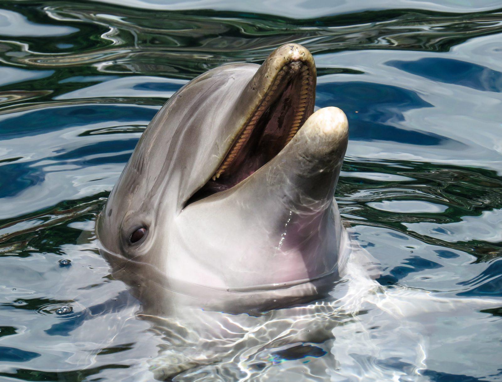 O golfinho é um dos animais sociáveis que existe.