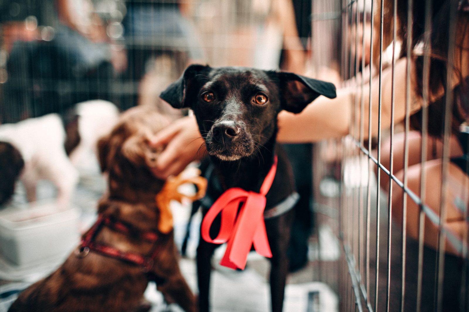 É preciso combater com força os maus tratos aos animais.