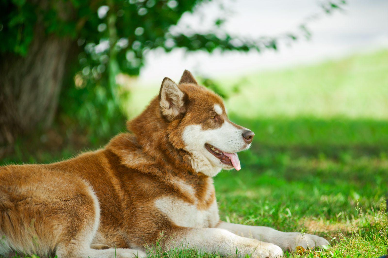 9 Melhores cães para viver nas montanhas