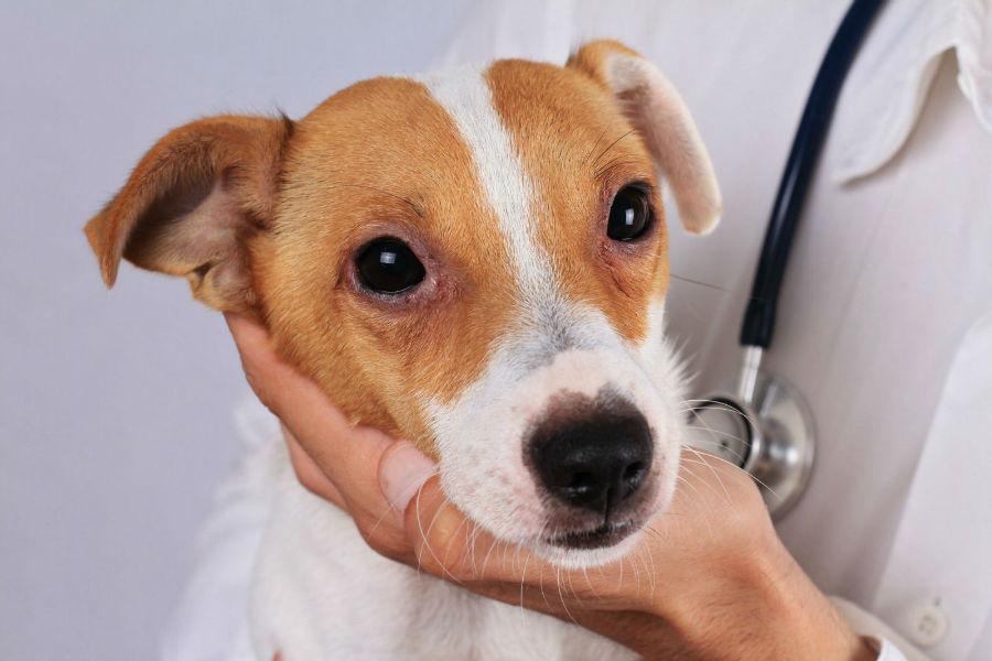 monitorar-saude-cachorro