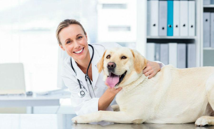 obesidade-canina-identificar2