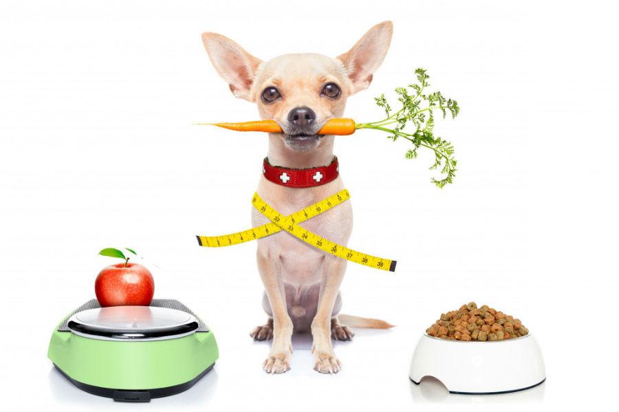 obesidade-canina