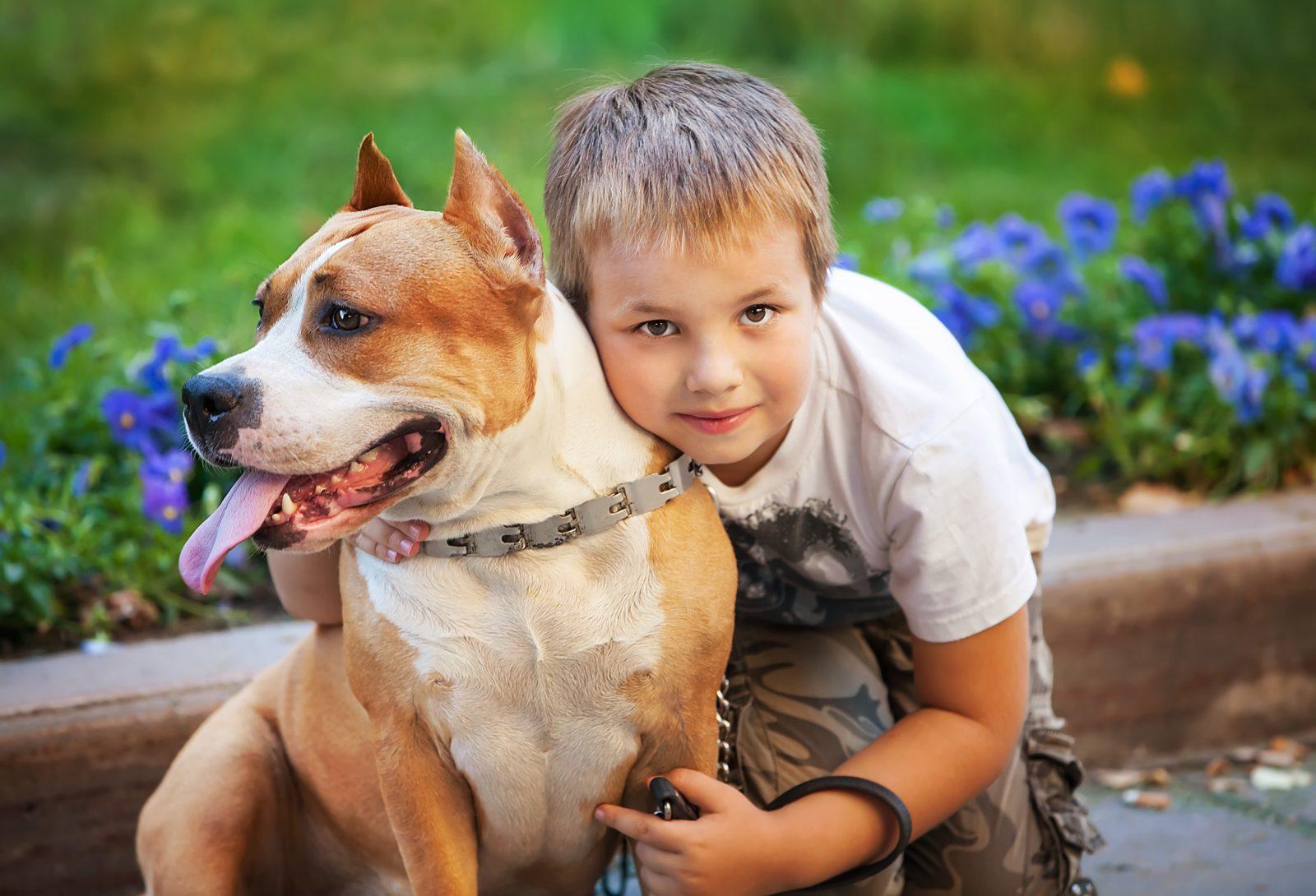 temperamentoao-pitbull-terrier-americano