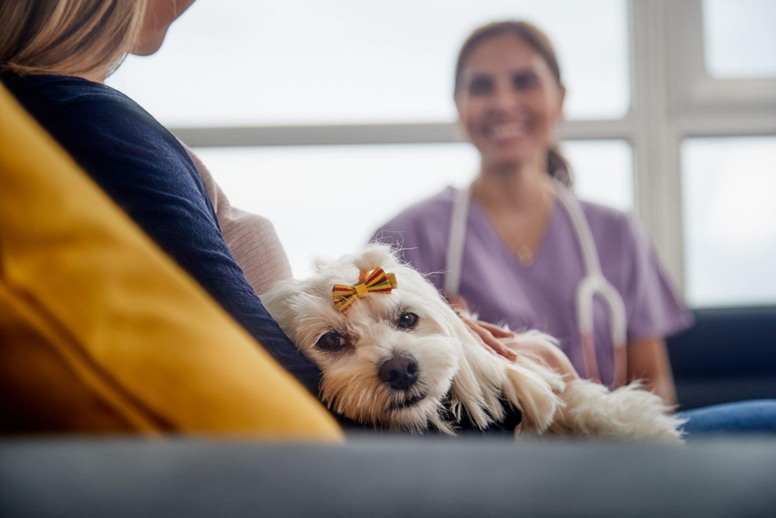 Plano de saúde para cachorro: cachorrinha no colo de sua dona durante consulta veterinária.