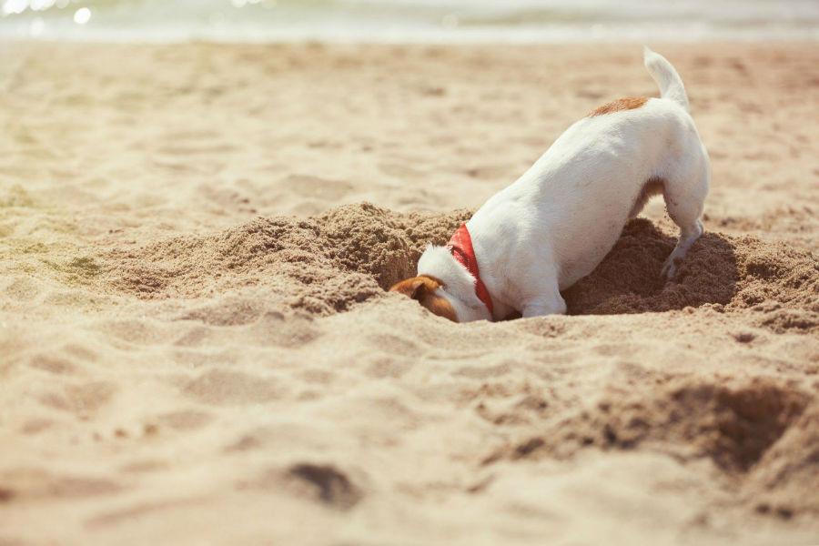 problema-comportamento-cachorro-cavar