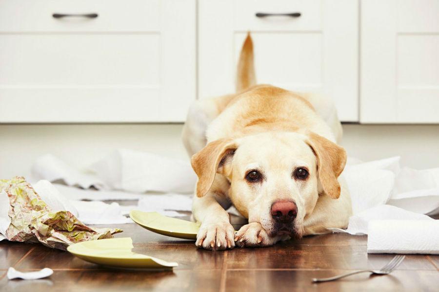 problema-comportamento-cachorro-destrutivo