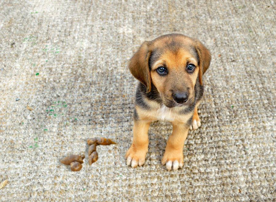 problema-comportamento-cachorro-fezes