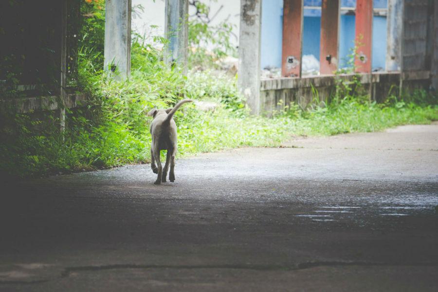 problema-comportamento-cachorro-fugir