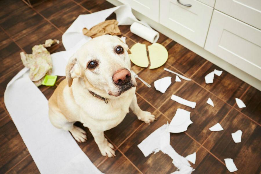 problema-comportamento-cachorro-lixo