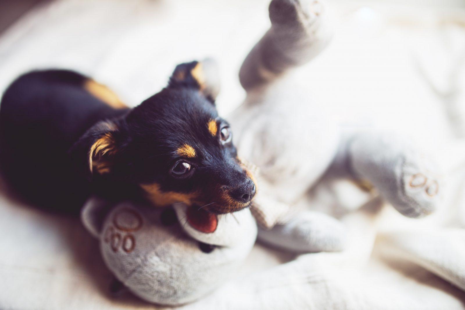 Produtos pet: cachorro com brinquedo de pelúcia