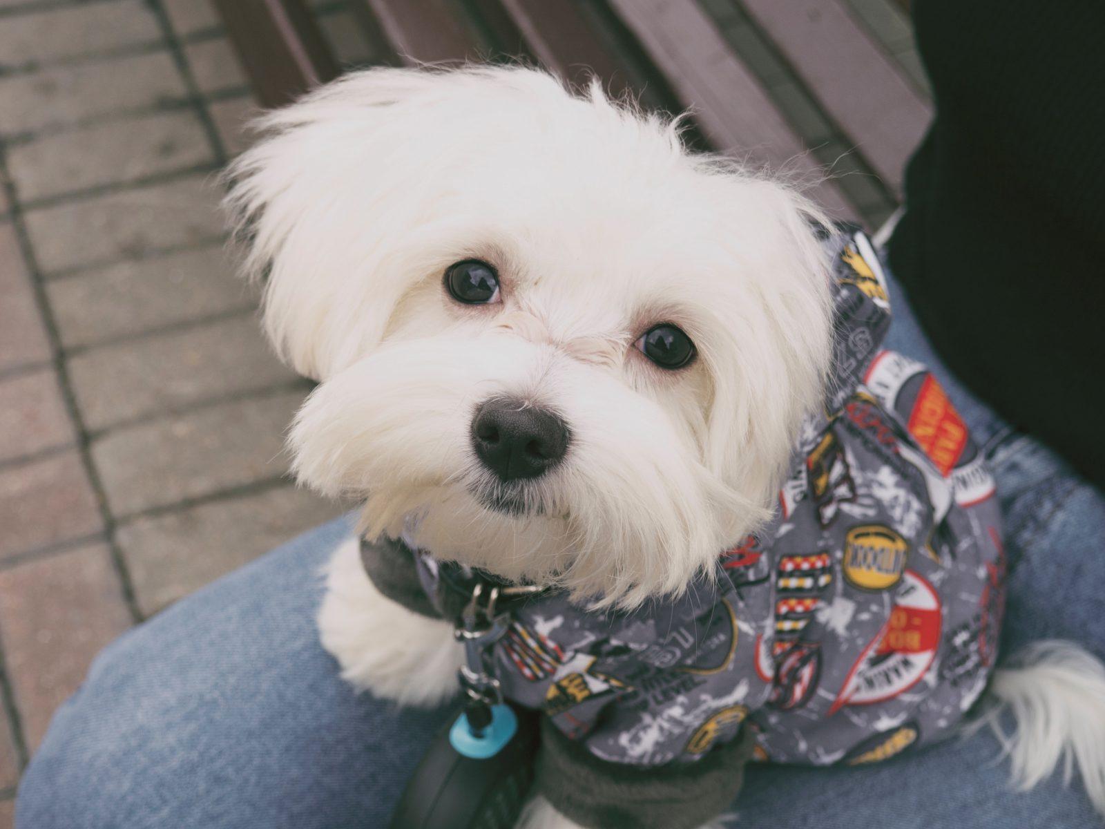 Produtos pet: a roupinha de cachorro