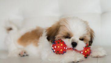 variedade de produtos para cachorros